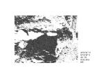 "Dessin ""Aiga - Variation 43°22'44N - 2°18'38E - Alt. 742m"" de Philippe Pitet - Série Aiga 2013"